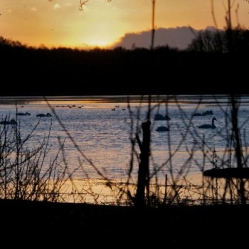 Sunset at the Tranquil Otter