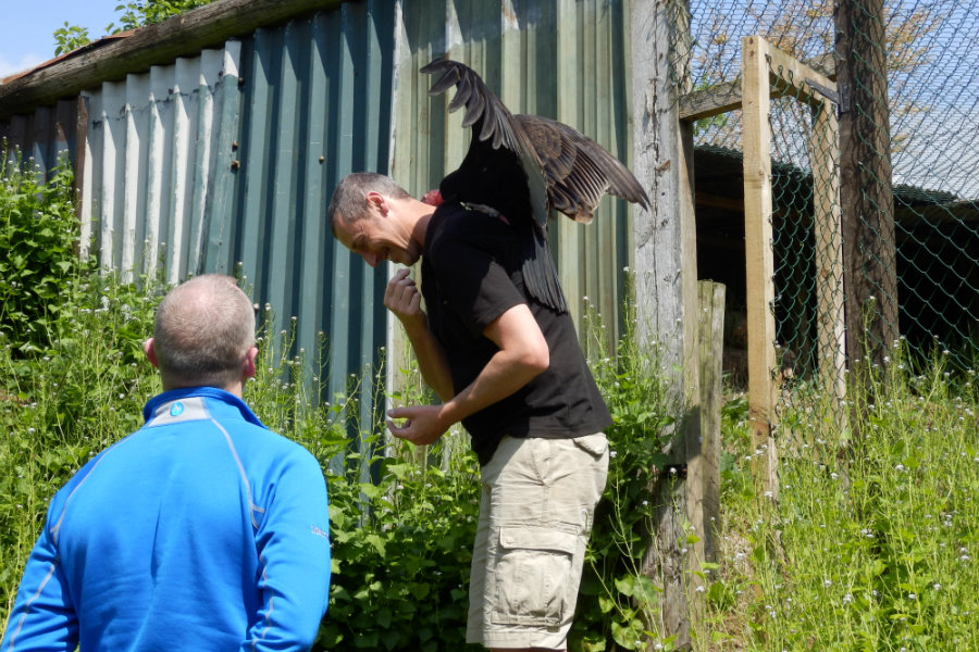 A vulture was sitting on his head… The Tranquil Otter