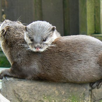 The Tranquil Otter