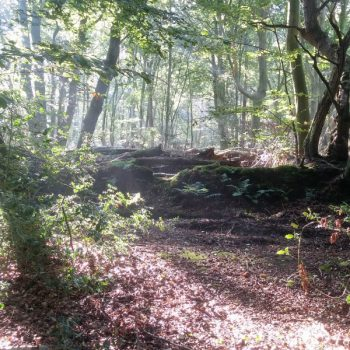 Woodland Walks at the Tranquil Otter