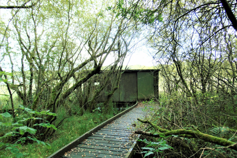Nature from a Fresh Perspective: Spend some time in our Bird Hide The Tranquil Otter