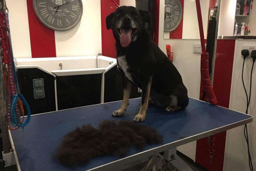Dog Grooming by 4 Paws The Tranquil Otter
