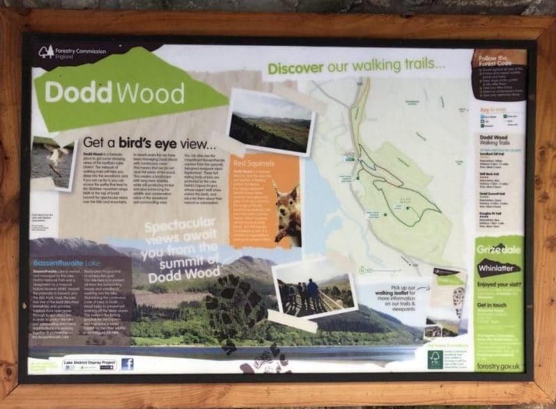 Forest Bath in Dodd Wood