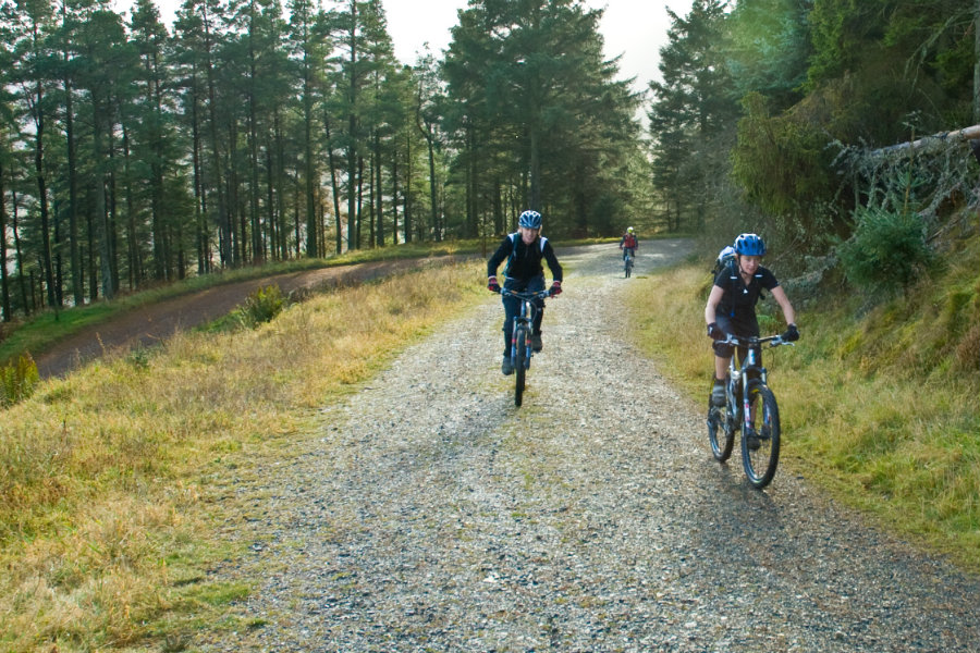 A day out at Whinlatter Forest The Tranquil Otter