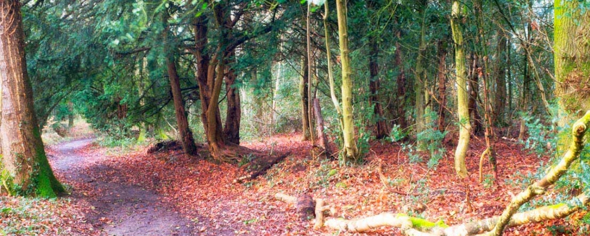 Enjoy some forest bathing in our own private woodlands The Tranquil Otter