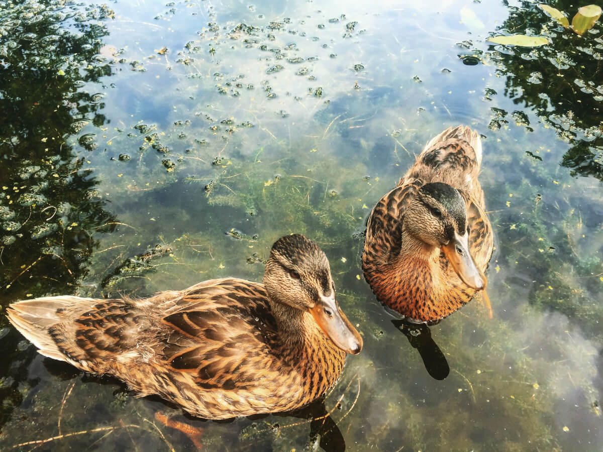 Wetlands Birds Survey The Tranquil Otter