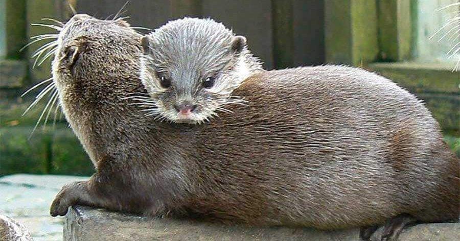 September Newsletter The Tranquil Otter